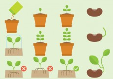 Free vector Vector Care And Plants Cycle #25634