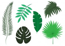 Free vector Vector Set of Palm Leaves #20567