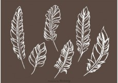 Free vector Chalk Drawn Feather Vector Pack #33881