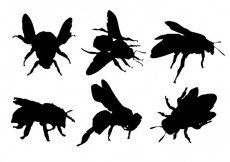 Free vector Free Bee Silhouette Vector #31513