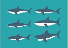 Free vector Shark collection #33099