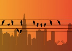 Free vector Vector Bird on a Wire #29627