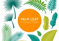 Free vector Collection of palm leaves #940
