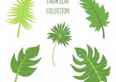 Free vector Pack of green palm leaves #454