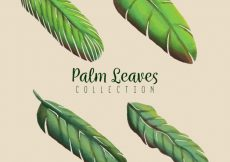 Free vector Pack of hand-drawn palm leaves #2185