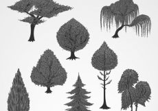 Free vector Collection of hand-drawn trees #10732