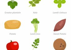 Free vector Healthy food collection #3788