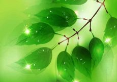 Free vector Nature Background with Fresh Green Leaves #4962