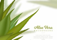 Free vector Background of aloe vera with blur #17816