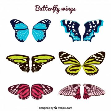 Free vector Butterfly wings pack #14411