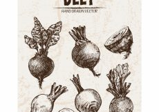 Free vector Hand drawn beet collection #13043