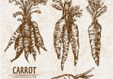 Free vector Hand drawn carrot collection #13081
