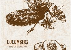 Free vector Hand drawn cucumber collection #13261