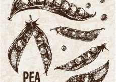 Free vector Hand drawn pea collection #13055