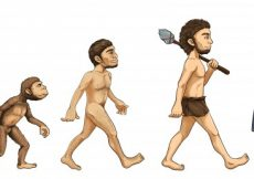 Free vector Illustration of the process of evolution #13489