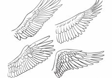 Free vector Set of hand drawn wings #14503