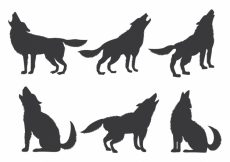 Free vector Set of wolf silhouettes #16175