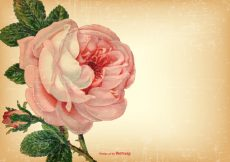 Free vector Vintage Shabby Floral Background #15310