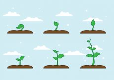 Free vector FREE PLANT GROWTH VECTOR #22021