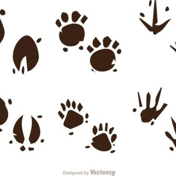 Free vector Muddy Animal Footprint Vectors #22246