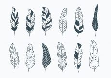 Free vector Pluma Collection #22222