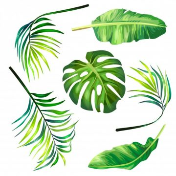 Free vector Set of botanical vector illustrations of tropical palm leaves in a realistic style. #23137