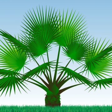 Free vector Single Palmetto Plant Vector #22029