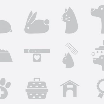 Free vector Gray Pet Care Icons #22210