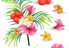 Free vector Vector illustration of a realistic style branch of a tropical palm tree with hibiscus flowers #23015