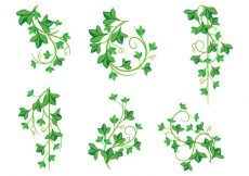 Free vector Illustrations of Poison Ivy Plants #22027