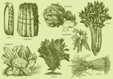 Free vector Old Style Drawing Vegetables #19390