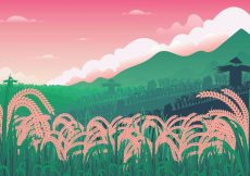 Free vector Free Rice Field Illustration #24029