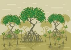 Free vector Mangrove Vector Forest #23941