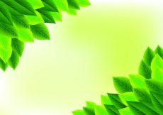Free vector Background Of Natural Green Leaves #23879